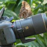 macro photography training