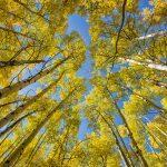 Aspen colors fall photo tours
