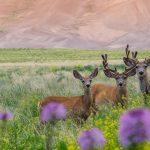 Photo Tours Great Sand Dunes National Park