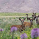 Wildlife photography at Great Sand Dunes NP