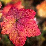 Autumn photo tours