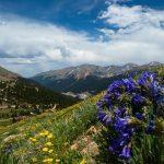 Wildflower photo workshops jones pass