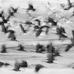 Sandhill Crane Migration - Photo Tours