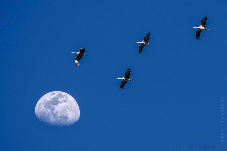 Sandhill Crane Migration - Photography Tours-2