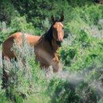 Photography Tours - Little book cliffs wild horses