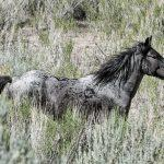 Rocky Mountain wild horses photography workshops