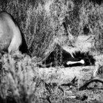 Little Book Cliffs Wild Horse Sanctuary - photo workshop