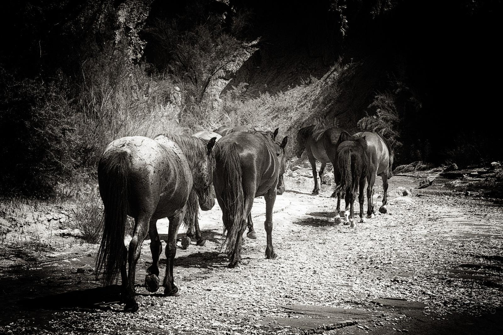 Colorado Wild Horses Photo Tour Big Sun Photography Tours