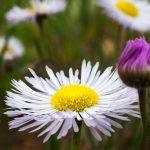 Colorado Wildflower Photo Tours