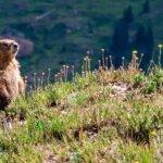 Wildlife Tours near Telluride Colorado