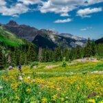 Wildflower photography tours - Imogene Pass Colorado