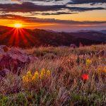 Sunrise and Flowers - Denver photo tours