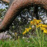 Wildflowers - Wild Flower photo workshops