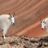 Wildlife Photo Tours on Red Cone Pass Colorado