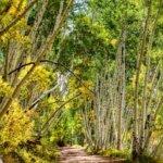 Aspen Fall Color Photo Tours