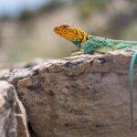 Wildlife round in Rattlesnake Canyon Colorado