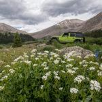 Chihuahua Gulch Colorado-wildflowers and jeep tours