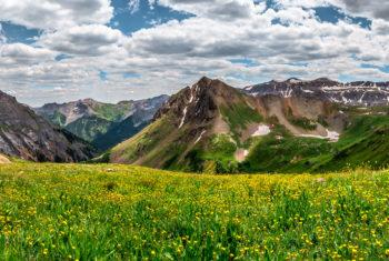 alpine wild flowers - photo tours San Juan Mountains